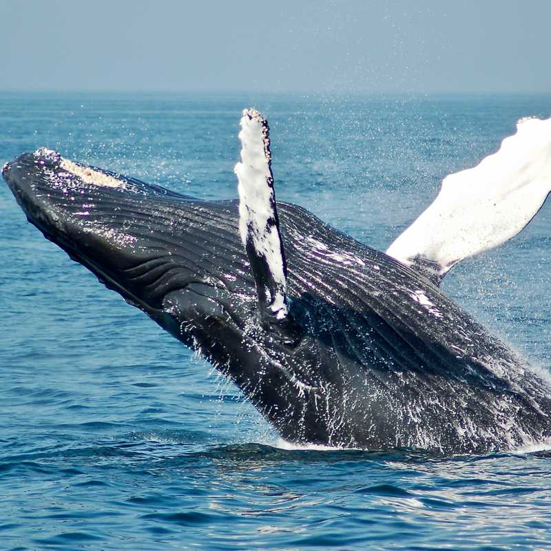 Why Freelancers Should Be Scared Of Whale Clients